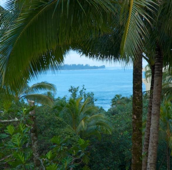 Kauai Forest Window