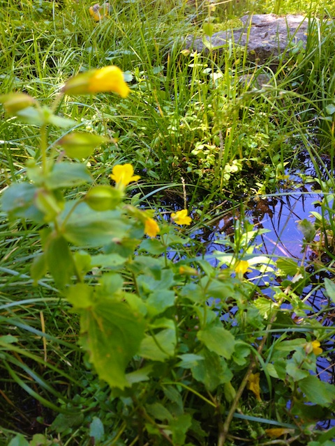 Yellow Flower spring