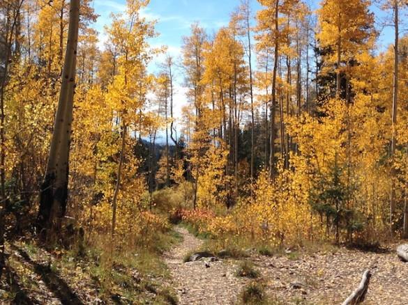 Aspen Path 2014