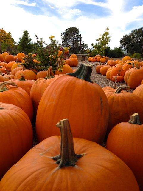 Pumpkins Sky