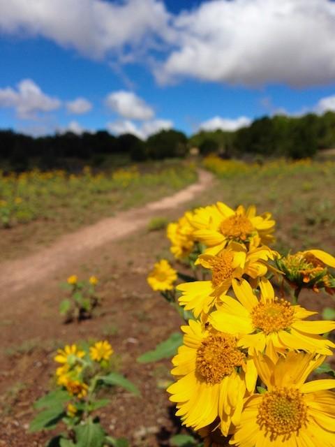 Sunflower Bike Trail
