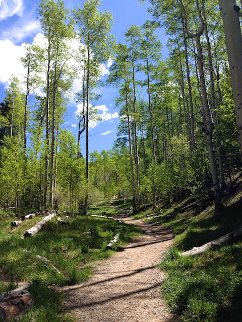 Forest trail spring