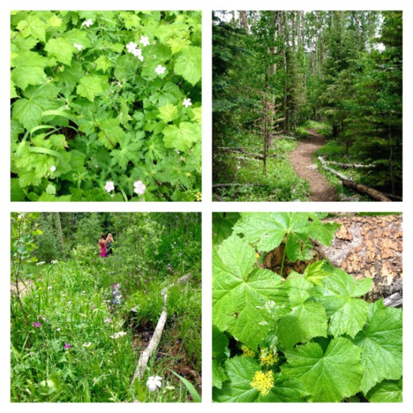 Forest trail spring 2 (1)